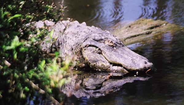 Florida Wildlife (new)